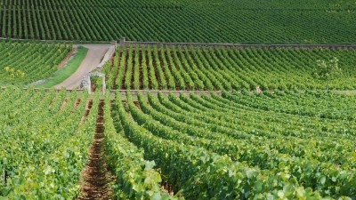 Montrachet_vineyards