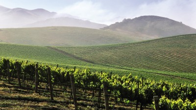 santa_barbara_vineyards_ttm